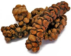 kopi luwak raw form