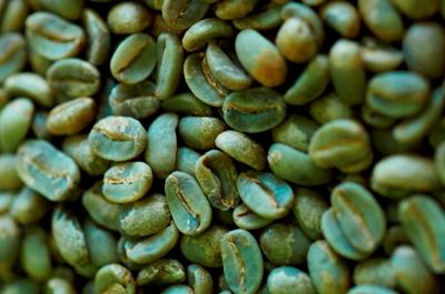 Green coffee beans can help you lose weight