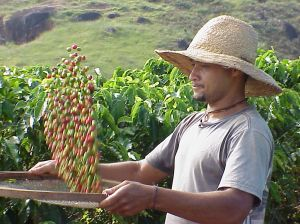 Coffee prices is going up because of bad harvest