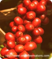 robusta-coffee-beans